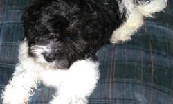 i am giving away my shih-tzu/maltese female she is a good dog and i feel bad for her because i dont have room for her she is good with kids shes been around my kids since the day she was born i gave her her first shots and dewormed i have shot record if