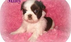 Shih Tzu puppies ready for their new homes soon. We come socialized, vaccinated, wormed and VET checked. Would you like us to be part of your family? Call 330-754-8136