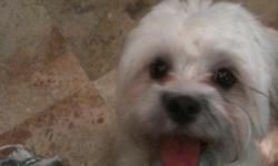 I recently adopted a 7 month old Maltese/Shih Tzu mix female pup. My other dog is extremely jealous. So I am rehoming the new pup for $100 (I paid $200 for her). Her vaccinations are UTD as of 12/2010 and she has been recently groomed. She is about