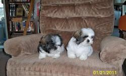 I have 2 males left..DO NOT WAIT..PRICED TO SELL AT $200. Have shots..10 weeks old..Born on Nov. 11..Adorable,fluffy and bouncy..CALL 580-265-4634...both parents full blood..Father has papers, mother does not.. VERY BEAUTIFUL SHIH TZU'S.