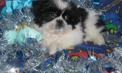 3 male shih tzu puppies for sale. One black and white. One solid black with white markings. The last one is gold with black mask. They are wormed and vaccinated up to date. They are pure bred and registered. They were born 10-11-12 and will be ready