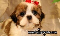 Our super cute Shih Tzu puppies are ready to come home with you! They are 8-12weeksold and the price starts at $400. They are all registered andtheir vaccinationsare up to date. Ifyou wouldlike to see