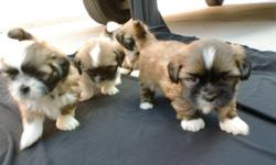 I HAVE 4 PUPPIES 2 FEMALE 2 MALE 5623346617