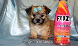 Congratulations ? you have found the best place in the country to get your new teacup puppy! The Star Yorkie Kennel brings you the best selection of teacup puppies and assures you will be happy with your new baby. Good families only! Please do your