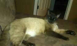 Beautiful Male Siamese about 2years old pure bred without papers. Good with dogs, most other cats and kids. Neutered, rabies/distemper vaccinated, FIV/Feluk negative, and microchiped. Availabe through an approved rescue, please help us help cats and adopt