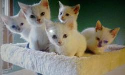 Kittens need homes asap!!!!! Litter trained dewormed Verycute and loving.