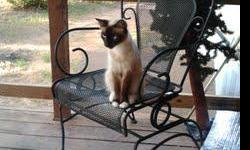 She is a sweetie and loves to be loved. Lives in Beggs, owner is downsizing and moving to town. Needs a good home.