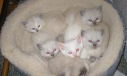 Adorable,playful and social kittens, played with everyday. 4 males,1 female,litter trained.ready for new home.