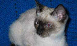 All kittens have found their forever homes. A new litter is expected the end of March and ready to go mid May