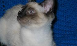 Born Aug. 4, 2010. These kittens are tame and litter trained. They had their first immunizations at 6 weeks. 1 male and 1 female left Ready to find their forever homes. These are very fun loving kittens and love to cuddle with people. They have been