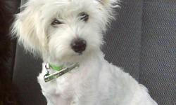 Im Selling a pure white 6 month old maltipoo male puppy. he is now FULLY POTTY TRAINED! we dont even crate him anymore! he had plenty obedience training and is a very smart boy. he also knows 2 tricks already and has been socialized with lots of people,