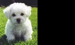 678-667-2322 White fluffy hypoallergenic REGISTERED Bichon Frise puppies. They are up to date on their vaccines and worming and come with a 1 year written (money back) health warranty. They are being house trained and love to play. They will be freshly