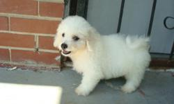 678-667-2322 White fluffy hypoallergenic REGISTERED Bichon Frise puppies. They are up to date on their vaccines and worming and come with a 1 year written (money back) health warranty. They are being house trained and have love to play. They will be