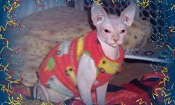 Male and female sphynx kittens for adoption . They are house and potty trained, friendly with kids and other pets. They are completely hairless and hypoallergenic cats. for more information send email to charitee2011@live.com