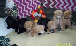 we are 6 weeks old now 3 of us are going to homes mom dad on site please call 541 647-9831