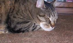 MISSING since 10-01-10 from 92557 zip code area / could be anywhere by now / stomach hernias (handle carefully) / neutered / front declawed / if found/seen please call ASAP 909-867-9481 He was being babsat for the 1st time-due to a death in the family. I
