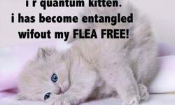 Stop poisoning your pets New way to rid your pet of fleas and worms.... Even protects against heartworm! www. Fleafreeorganically. com Call jan: 760-331-4525