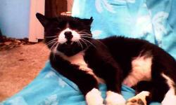 Very mellow black and white male cat would love a home to rest his paws. He was a stray that I have been taking care of for about a year but now I have to move and have 5 other cats, a dog and a baby on the way to care for. He stays outside but would