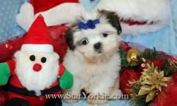 Wow!!! These puppies are unbelievably small and ssssoooo cute. So sweet. They are very happy and playful and like to give kisses and cuddle. My babies are 100% purebred and have all their registration documents, health certificate and I also give a