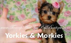 We specialize in super tiny teacup, teacup and toy size puppies. We also offer lifetime pet replacement and written money back size guarantee available. Our puppies' prices are reduced daily up to $100.00. We have baby face Maltese, MaltePoo, long and