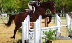 Telepathist specializing in horses. Find out information about your horse that has always puzzled you. What they like/dislike. Why they behave the way they do. Will travel to your facility for no extra charge within 20 miles of McKinney. Multiple horse