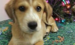 Just arrived. ..Long hair dachshund **Jug**pomeranian mix**Lab/shepherd mix**Boston Terrier**English bulldog mix**Rottweiler**maltese**Lhasa APSO**and more..call--..small animals..reptiles. .feeders..and supply--..puppy.**LAY*A*WAY**