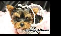 We work with a small group of private breeders that are USDA registered who raise their puppies at home to produce puppies that are well socialized. We specialize in toy breeds and also very tiny teacup and pocket size dogs. We are affiliated