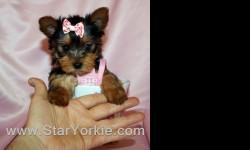 Congratulations ? you have found the best place in the country to get your new teacup puppy. The Star Yorkie Kennel brings you the best selection of teacup puppies and assures you will be happy with your new baby. Good families only! Please do your