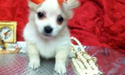 the sweetest tiniest t-cup Pomeranian female puppy! she is a beautiful white/light beige color with big black eyes and a cute short snout! she is only 9wks w her 1st vacc & worming. she is aslo being potty trained* come see her today --