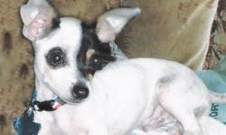 Toy Chihuahua male (white with black, neutered) & female (fawn) non-breeder pair about 5 years old.Reg. . $100.00 or will negotiate price for ea. $ off for gas if you buy. Very sweet, loves people. Wt. about 5 lbs ea. Location Comanche, TX. If interested