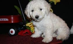 Please call Ruth Bowman @ 717-355-0636 or Sherri Weaver @ 717-949-6863 to arrange a meeting with this puppy. These are awesome Bichi-Poo Puppies. (Father is Bichon Frise and mother is a Bichi-Poo) They are so cute. They have been vet checked and they had