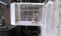 Two bird cages for sale they will both maintain a cockatiel or two. We unfortunately just lost our bird Harley after 19 yrs. The cage is in great shape.... There is only a stand for one . Cage comes with dishes and some toys if desired. Asking 45. 00 with