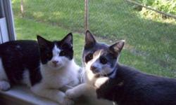 I have two cats that are about a 1.5 years old. They are brothers and very affectionate. I am unable to keep them after I move. I would like to keep them together, since they have been together since birth. They are very well-mannered and low maintence.