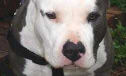 the pic above is of the dam and sire pup's available born 4/21/12 puppy pedigree http://www.bullypedia.net/americanbully/testmating.php?dam=154221&sire=147913&gens=5 ukc registered call me or text me at two males left and four females $1000.00 OBO