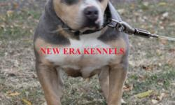 UKC REGISTERED 2 FEMALES 11 WEEKS OLD CALL 423-266-6144 FOR FURTHER INFORMATION