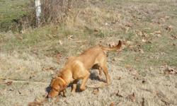 Located in East Texas outside of Center near Lake Toledo Bend we offer waterfowl and upland training for your hunting dog. Our own Labs both point and retrieve and we use them on our hunting preserve and be sure to check out the red and yellow Labrador