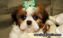 You have to come and see the cutest Shih Tzu puppies. They are 8 - 12weeksold and the prices start at $400. They are registered andall thevaccinesare up to date. Ifyou wouldlike to see