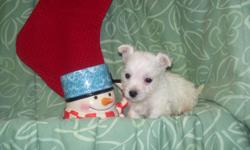 One boy available...he is a cutie! 9 wks, 2 shots, dwormed, dew claw removed $400 810-496-3697