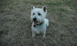 I have 6 female Westie's left. They were born on Feb 27, 2011 and are 8 weeks old this weekend (4/23/11). Puppies are registered and will come with ACA registration papers. They have had their shots and have been wormed. Puppies are located in south