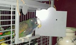 He/she no dna. His name is Barney. He is real sweet once get gets to know you. He is not a aggressive bird at all. He will say a few words. I Just have no time for him right now and I have my grandchildren living with me now. He will and has to go with