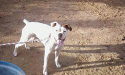 i have a female boxer hes white with a brown spot over her left ear! she was born 9-11-08 almost 3 yrs old! shes good w people and kids she does not like other dogs she needs to be an only dog! were located in safford about 1 1/2 hrs from tucson plz call