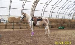 WONDERFUL HORSES FOR ADOPTION These horses are currently fostered in Cleveland, TX and are ready for great new homes. Links below include bio, picture and video on most horses available in Cleveland and others are available on the website. Questions