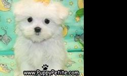 Our toy and teacup Maltese puppies are 8-12weeksold and are ready to come home with you. The price for the puppies starts at $500. All of our puppies are registered andall vaccinesare up to date. Ifyou