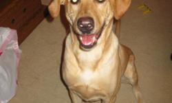 Sasha is a 70 pound, 5 year old, yellow lab. She's lived with us since she turned 1 and has grown up with our 2 young children. She is spayed and just visited vet for shots this July. Sasha is great with kids and other dogs. She has been through basic