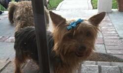 yorkie female, 4years old. ACA registered. great health!! up to date on shots. we've owned her since she was a baby but we just dont have the time and attention she needs. we love her very much and would like her to go to a great family that will