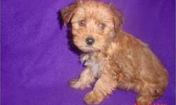 beautiful male pup 9 weeks, any questions, please call us at 281-992-0900.