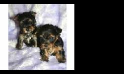 we have three yorkie puppies ready to go, they are great with kid and are current on their shots, they will make a great addition to your families