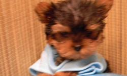 Male & female registered Yorkie puppies staring at $500. Yorkie mix puppies $250 & up, Yorkie Poos, Morkies, Shorkie. Also have other purebred and other mix puppies all at reasonable prices. All puppy shots up to date. We deliver to your area at a