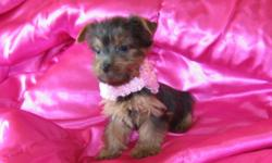 She is CKC registered, up to date on shots and wormings. She loves to be held and carried around. Call me at 805-835-4430