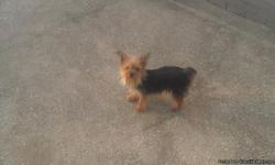 i have 4 yorkie females .1 is pregnant due on aug 2nd she has 6 puppies. all are under 3 years old. 1 is 6 months old she weighs 2 pounds. one is 2 years old she weighs 3 in half pounds. one is 2 years old and weighs 5 pounds. the one that is pregnant is